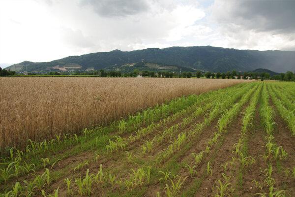 agricoltura-biologica-1