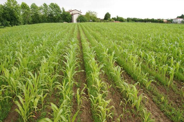 agricoltura-biologica-2