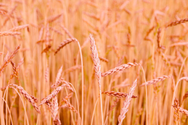 agricoltura-biologica-3